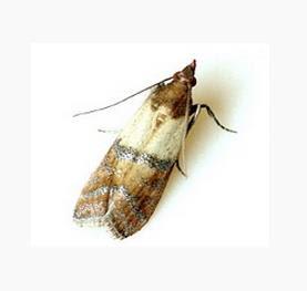 moth extermination tulsa ok