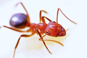 Ant Exterminator Tulsa OK