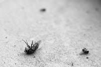 fly extermination tulsa ok