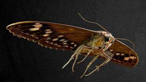tulsa moth exterminator oklahoma