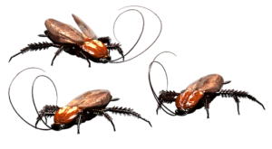 roach exterminator tulsa